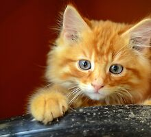 Ginger Kitten by mrdoomits