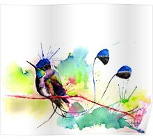 """Spatuletail Hummingbird"" Poster"