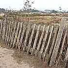 The Gradually Disappearing Fence by Martha Sherman