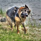 Wet German Shepherd Plush Shakin' It! by Skye Ryan-Evans