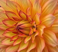 Catching on Fire.  (View Larger) by Lee d'Entremont