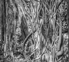 A Tangle Of Vines by Thomas Young