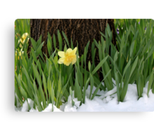 Spring In Colorado Canvas Print