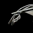 Driftwood Horse  by Cody  VanDyke