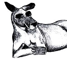 Cool Kangaroo Photographic Print