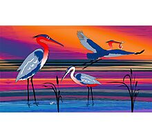 3 Red Herons Photographic Print