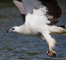 The Eagle Thief by byronbackyard