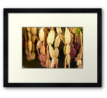 Surprising Flower/Alien Flower - Macro Photography Framed Print