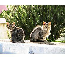 Kittens enjoy Greek Sun Photographic Print