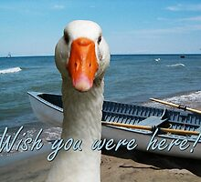 Wish you were here! by Marie Van Schie