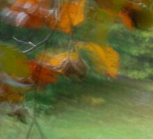 Leaves and nuts in Peebles park by rosie320d