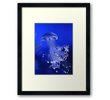 The Beauty of A Blue Jellyfish Framed Print