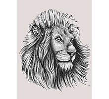 Lion. Photographic Print