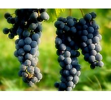 Concord Grapes Photographic Print