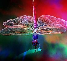 DRAGONFLY PINK DELIGHT by Tammera