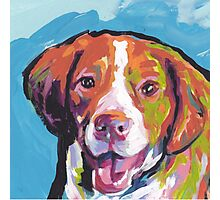 Brittany Spaniel Bright colorful pop dog art Photographic Print