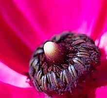 Inside Hot Pink Flower - macro by maddyh100