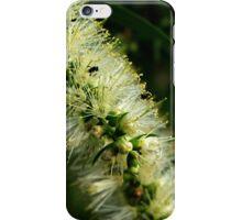 Bottle Brush Flower, with a few friends iPhone Case/Skin