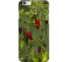 red and blue chili iPhone Case/Skin