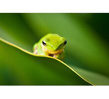 Dwarf Tree Frog Photographic Print