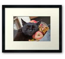 black cat on old barrel Framed Print
