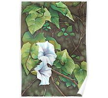 Bell Vine Flowers - Aquamarkers. Poster