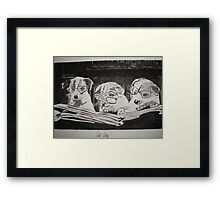 Clever Dogs Framed Print
