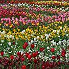 Floriade by Nicola Schultz
