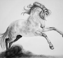 """To Dance"" by SD 2010 Photography & Equine Art Creations"
