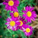 Purple Daisies by Candice84