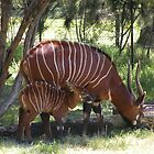 East African Bongo and Calf. by Trish Meyer