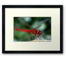 Enter the Dragon Framed Print