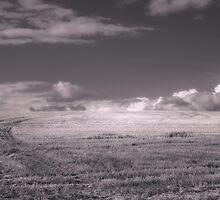 Sky Field by maratshdey