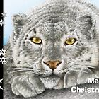 Snow Leopard Christmas Card by Lorna Mulligan