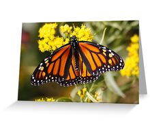 Monarch Butterfly (Female) on Golden Rod Greeting Card