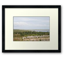 photography of forestry in Nova Scotia Framed Print