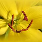 Yellow Flowers by Stephen Thomas