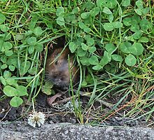 Gopher in the Clover by David Denny