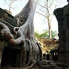 Silk Cotton Tree - Temple Ta Prohm, Cambodia by Bev Pascoe