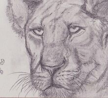 Lioness in Pencil by Mariaan M Krog Fine Art Portfolio