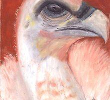Baby Vulture by Mariaan M Krog Fine Art Portfolio