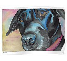 """Little Black Dog (""""Korra"""" the lab-mix) Poster"""
