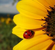 Ladybug on a Sunflower by JungleJones