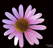 Lighted Daisy by Amy Brown