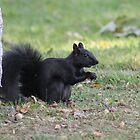 Black Squirrel by Vicki Spindler (VHS Photography)