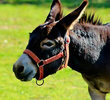 Here Little Donkey by Kathleen Daley