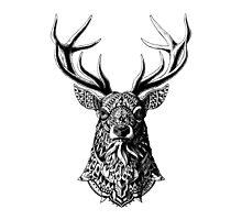 Ornate Buck Photographic Print