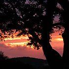 Spring sunset...............! by Roy  Massicks