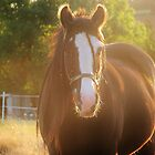 Horse in a Sunset. by Splimse