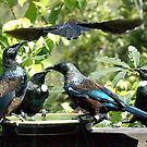 Tui - another one who left without paying.......! by Roy  Massicks